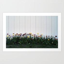 Tulips, Ottawa, Ontario, 2013 Art Print