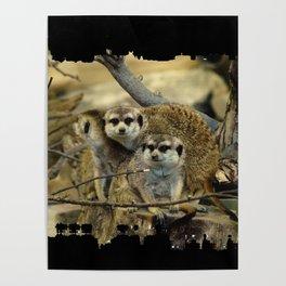 African Meerkat Trio Poster