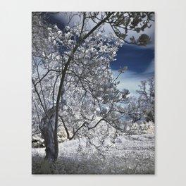 The secret woods Canvas Print