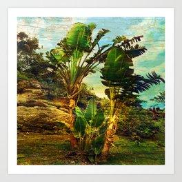 Traveller's Palm On Pic Pardis in Saint Martin Art Print