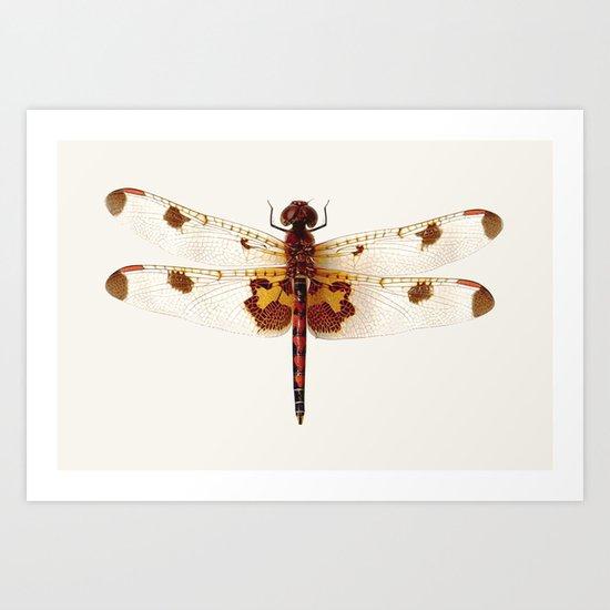 dragonfly #4 Art Print