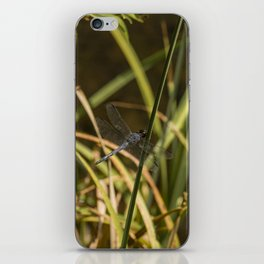 Dragonfly in the marsh iPhone Skin