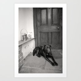 Chocolate Lab in the porch Art Print