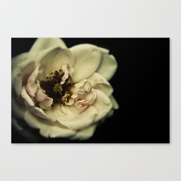 The Great Flower Consortium - Member No. 136A Canvas Print