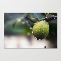lime Canvas Prints featuring lime by JOERGOTTO
