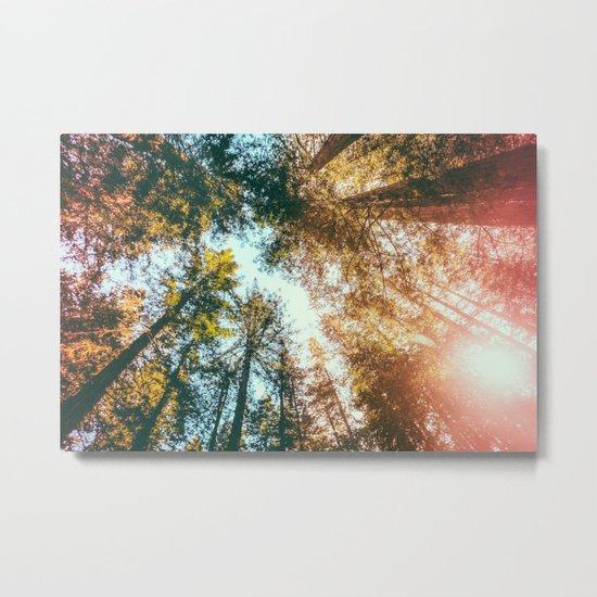 California Redwoods Sun-rays and Sky Metal Print