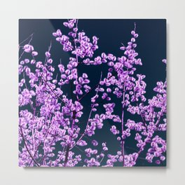 willow catkin II Metal Print