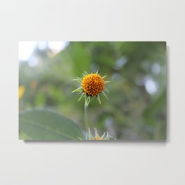 You were beautiful but different Metal Print