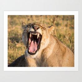 Lioness Bares Her Teeth Art Print