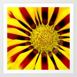 Red and Yellow Daisy Art Print