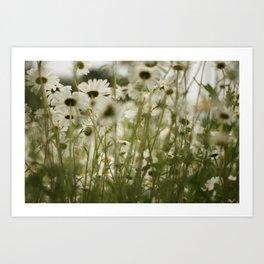 white daisies :) Art Print