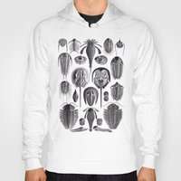 geology Hoodies featuring Trilobites and Fossils by Ernst Haeckel by Yak Lab