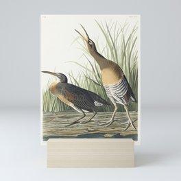 Salt Water Marsh Hen from Birds of America (1827) by John James Audubon etched by William Home Lizar Mini Art Print