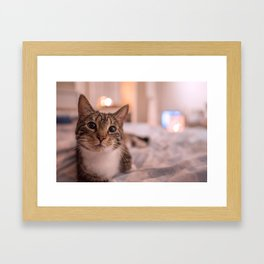 A relaxing kitty / kitten Framed Art Print