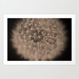 Macro Dandelion Fine Art Photography Art Print