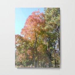 Arkansas Autumn Metal Print