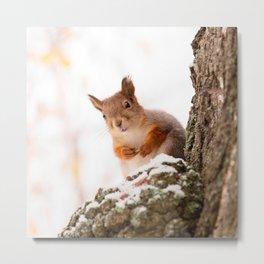 Squirrel in first snow #decor #buyart #society6 Metal Print