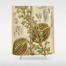 Macodes sanderiana, Orchidaceae 1918 Shower Curtain