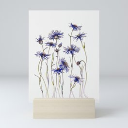 Blue Cornflowers, Illustration Mini Art Print