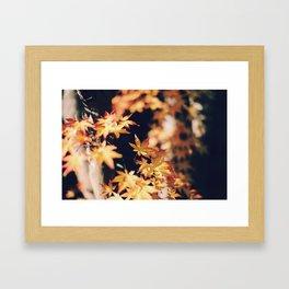 autumn reds 2 Framed Art Print