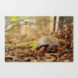 Turtle in the Yard Canvas Print