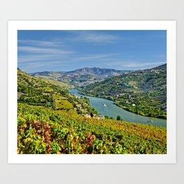 Vineyards on the Douro Valley near Peso da Regua Art Print