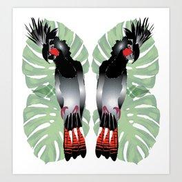 Australian Black Cockatoo Art Print