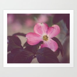 Pink Dogwood and Leaves Art Print