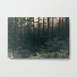 COLD PINES Metal Print