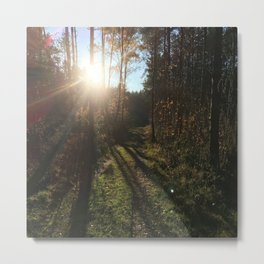 Forest Trees Nature Sunshine Metal Print