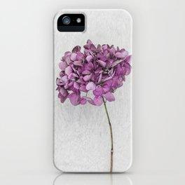 Pink Dried Hydrangea iPhone Case