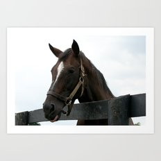 Sunshine Forever - Old Friends Equine, Georgetown KY Art Print