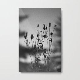 Black and White Photo: Twilight Garden 01 Metal Print