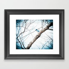 Mr Blue Jay Framed Art Print
