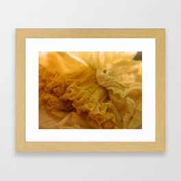 Daffodil Framed Art Print