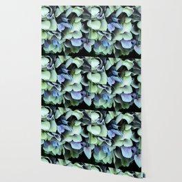 green and blue hydrangea Wallpaper