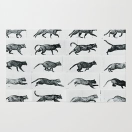Time Lapse Motion Study Cat Monochrome Cat Mom Herding Cats Rug