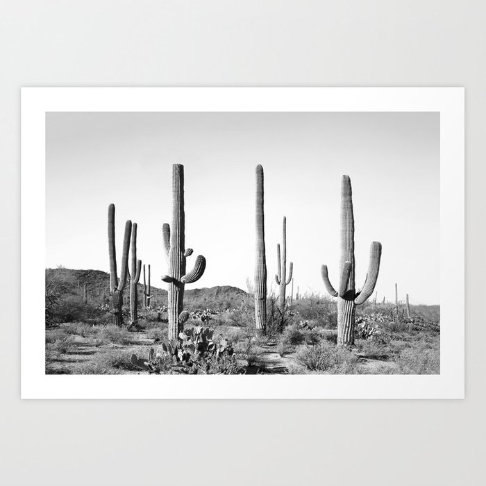 Grey Cactus Land Kunstdrucke