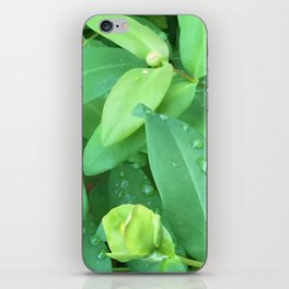 Kubota Garden green plant leaves with water drops iPhone Skin