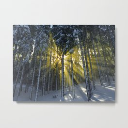 The Golden Light (Color) Metal Print
