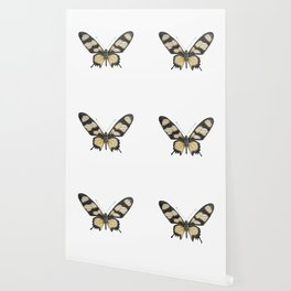 Butterfly | Swallowtail | Amazon | Painting | Exotic | Insect Wallpaper