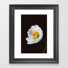 Papaver Nudicaule Framed Art Print