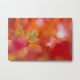 Green in a Sea of Red Metal Print