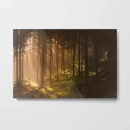 Morning forest Metal Print