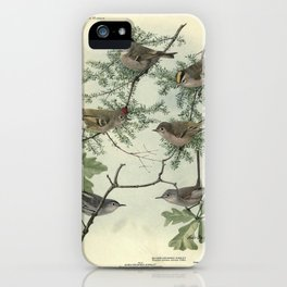 GOLDEN-CROWNED KINGLET, RUBY-CROWNED KINGLET, BLUE-GRAY GNATCATCHER14 iPhone Case