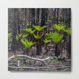 Punga forest Metal Print