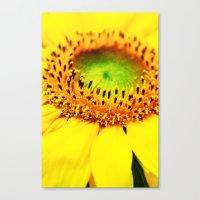 sunflower Canvas Prints featuring Sunflower by Falko Follert Art-FF77