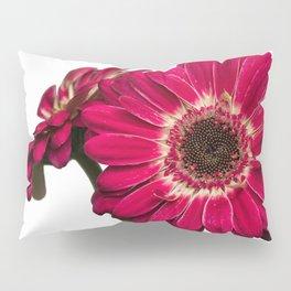 Gerbera Daisies on a White Background Pillow Sham