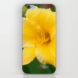 Yellow Daylily by Teresa Thompson iPhone Skin