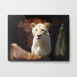 African White Lion Metal Print